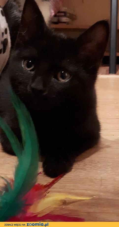 Kociak przylepka Czika szuka kochającej rodziny!