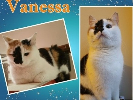 VANESSA - trójkolorowa kocia princessa