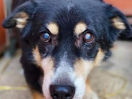Psi senior szuka PILNIE cierpliwego i kochającego domku na resztę życia