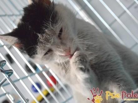 FRAJDUSIA-piękna  kochana  bardzo mila koteczka-szukamy DOMU