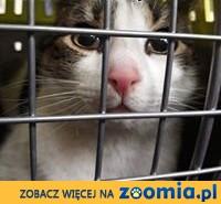 Kotek Mikuś szuka dimu,  mazowieckie Warszawa