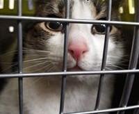 Kotek Mikuś szuka dimu   mazowieckie Warszawa