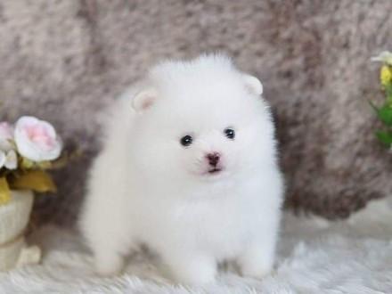 DRAGON - młodziutki psiak  który kocha psy  dzieci  koty do adopcji   łódzkie Łódź