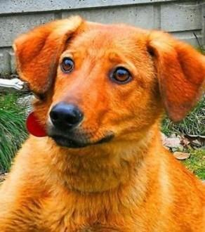 LAKI - 1 5 roczny  delikatny i nieśmiały psiak do adopcji