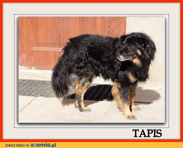 Średni,łagodny,przytulaśny,grzeczny,zaszczepiony psiak TAPIŚ_Adopcja_