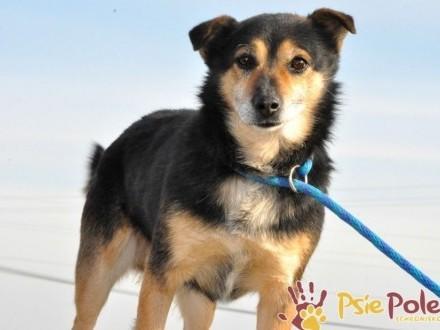 TRAFCIU-nieduży  bardzo uroczy psiak o wyjątkowym psim spojrzeniu-adopcja