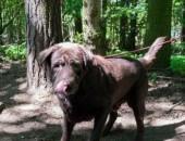 Forest - psi smutek potrzebuje kochającego domu