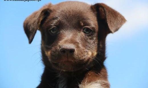 Bazylia - szczeniak szuka domu   mazowieckie Nowy Dwór Mazowiecki