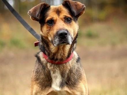 Kryzys - poczciwy  dobry pies czeka na dom