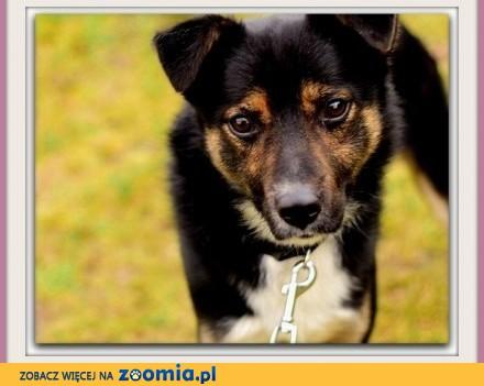 Średni 14 kg łagodny  energiczny przyjacielski psiak HATOR_Adopcja