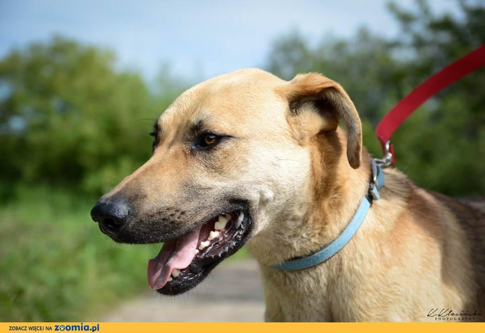 Sympatyczny, grzeczny Fado, młody pies szuka domu!