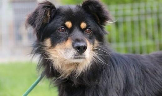 Bigos - grzeczny i przyjazny pies,  mazowieckie Nowy Dwór Mazowiecki