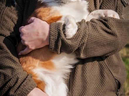 OTOZ Animals - Clint -piękny mikro psiak wyrwany z łańcuchowej niewoli