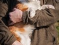 'OTOZ Animals - Clint -piękny mikro psiak wyrwany z łańcuchowej niewoli