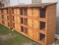 'klatka klatki dla królików drewniana 12 komorowa i inne...