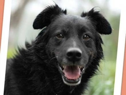 Średni 15 kg  5 lat grzeczny kontaktowy przyjazny pies CZARLI_Adopcja_