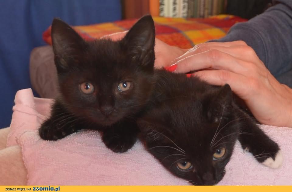 Dwie koteczki szukają swoich domków