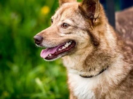 NOVA - oto dla Ciebie: i pies i przyjaciel:)   lubelskie Lublin