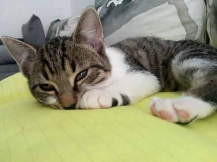 Niespełna 3 miesięczne kocię, wesoły maluszek do adopcji!