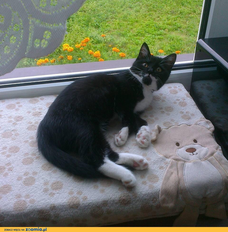 Zaginął kot Klakier