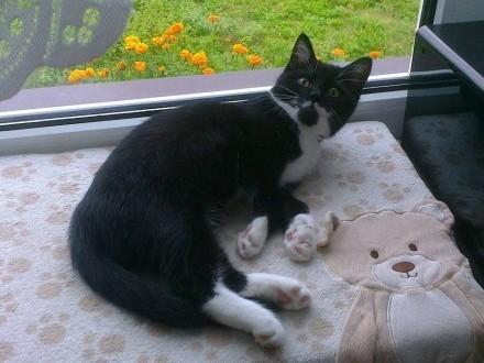 Zaginął kot Kleks