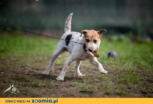 ZYZIA - kocha aport, wpada na trop - ona będzie Twoim top! ,  dolnośląskie Wrocław