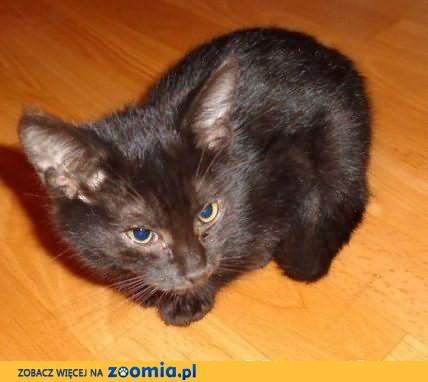 Monia - cudna czarnulka pilnie szuka domu!