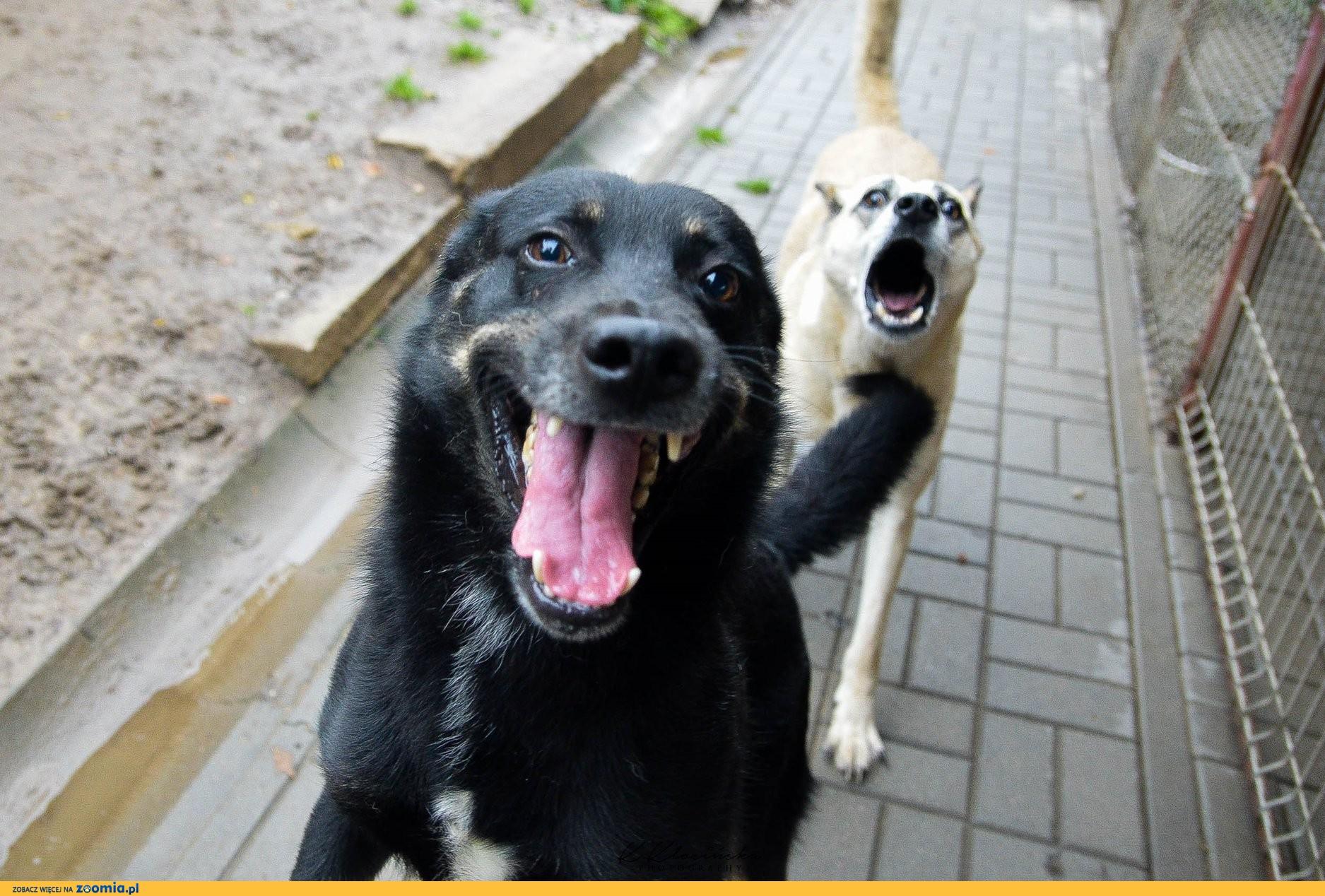Laki, psia przylepa, wesoły i przyjazny psiak szuka superdomu!
