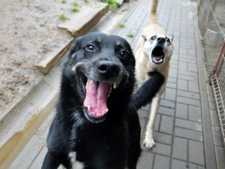 Laki  psia przylepa  wesoły i przyjazny psiak szuka superdomu!
