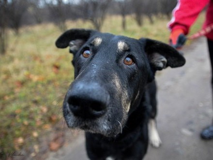 Niesamowicie zrównoważony Maślak  jedyny pies o TAKIM spojrzeniu