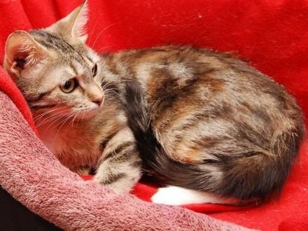 Rosie młodziutka kochana koteczka bez stópki Czy ktoś ją pokocha?   wielkopolskie Poznań