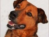 Gutek - pies sportowiec :)