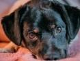 KACPEREK - cudowny, wpatrzony w człowieka psiak szuka domu,  małopolskie Kraków