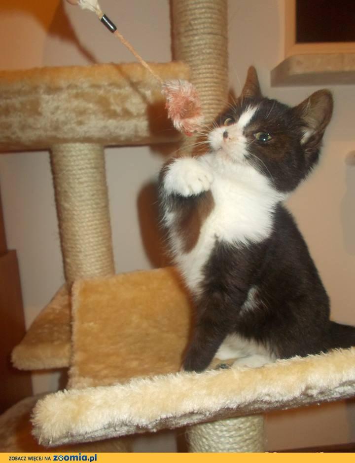 Kotka z wyprawką szuka domu ;)