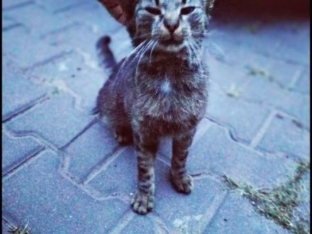Bezdomna kocia miziastość szuka swojego człowieka   lubelskie Lublin