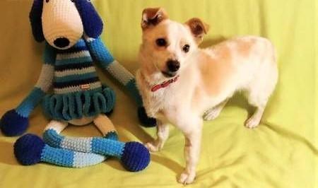 RAMBO - wrażliwy  malutki  6 kg psiak; szuka domu   małopolskie Kraków