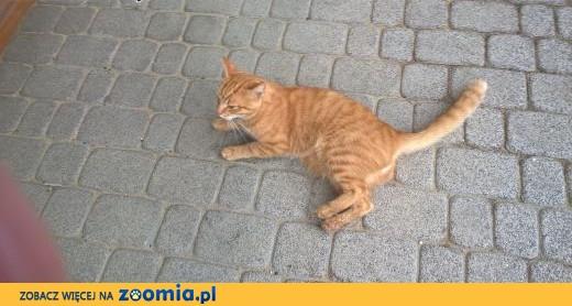 Inne rodzaje Ogłoszenia: oddam kota, oddam kocięta – Koty i kociaki szukają RR72