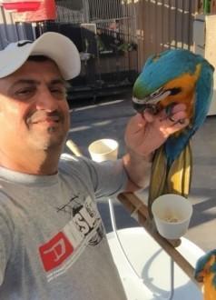 2 rundy papugi Ara niebieski / złoty