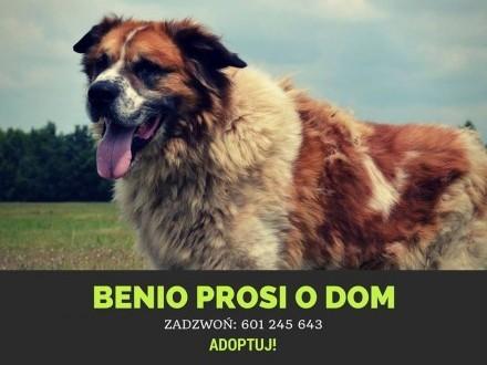 Benio-potrzebuje doświadczonego  odpowiedzialnego opiekuna