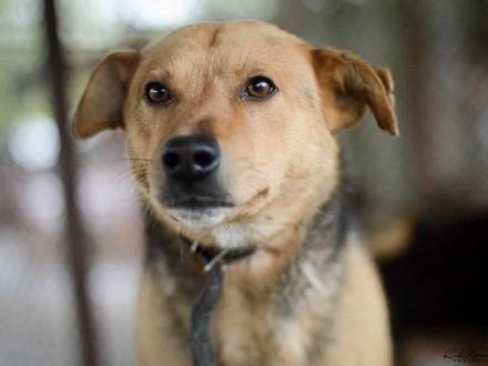 Aron  pies w którym nie można się nie zakochać! Popatrz w jego oczy