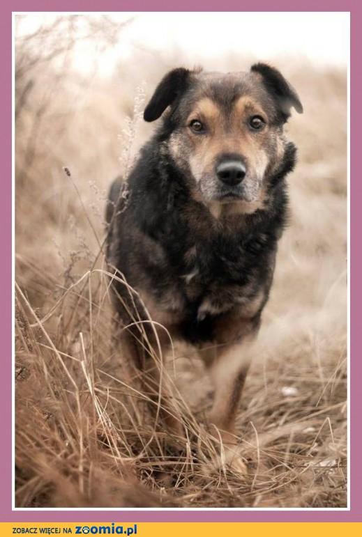 Średni 30 kg, przyjacielski, lekko nieśmiały psiak MOJU_Adopcja