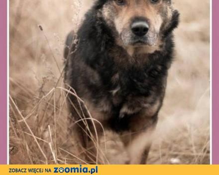 Średni 30 kg  przyjacielski  lekko nieśmiały psiak MOJU_Adopcja