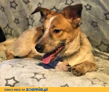 ŁATEK - kochany, wesoły, 9-miesięczny szczeniak; do adopcji,  łódzkie Łódź