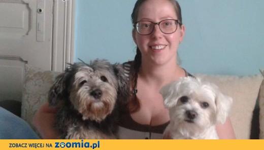 strzyżenie psów, psi fryzjer,groomer,  warmińsko-mazurskie Działdowo