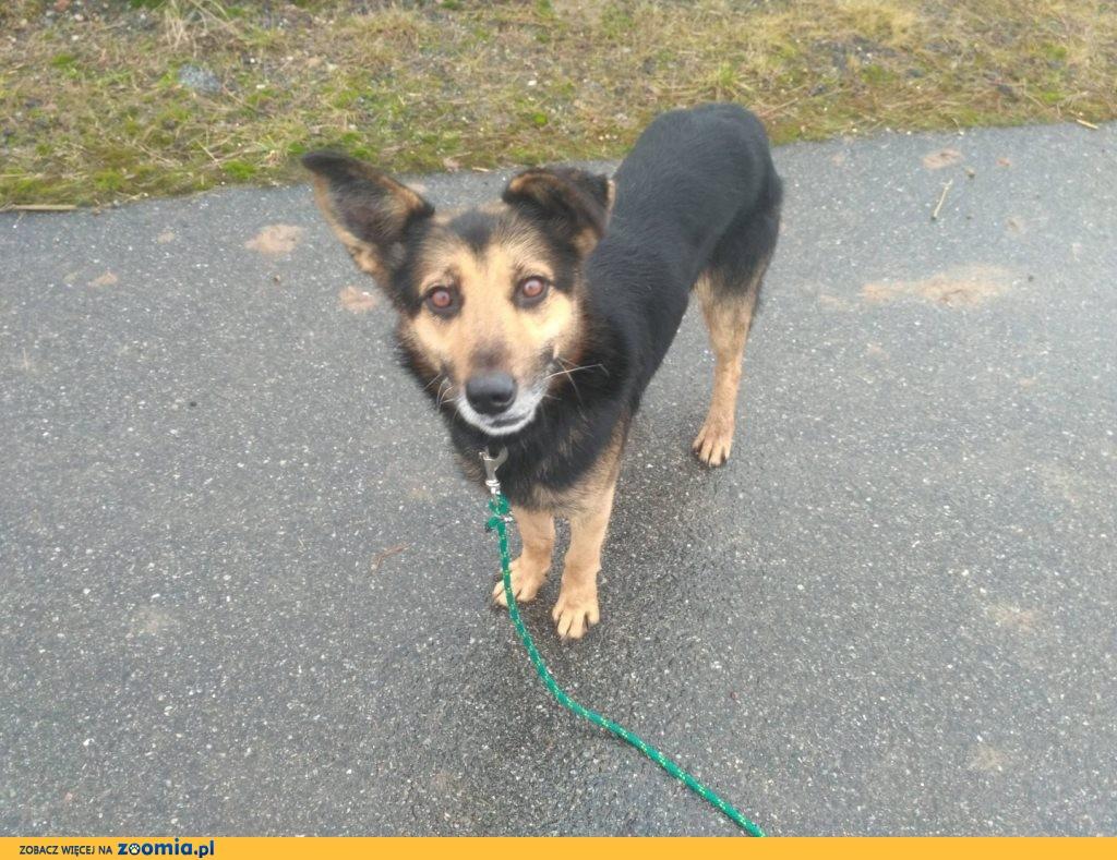 Cudowny Max, młody psiak szuka kochającego domu!