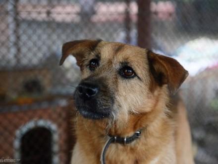 Szarik  piękny pies szuka kochającego domu!