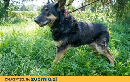 TRUST - starszy, biedny, nigdy nie kochany psiak prosi o dom!,  mazowieckie Warszawa