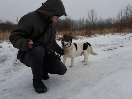Dandi-nieśmiały przytulas  15kg  biało-szary  spokojny