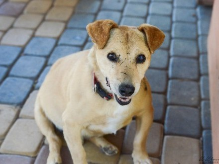 Rybak  wesoły  przyjazny psiaczek do pokochania!
