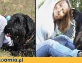 Szkolenie psów rodzinnych,  małopolskie Myślenice
